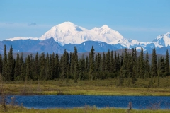 Day-05-Denali-National-Park-From-Parks-Highway-Alaska