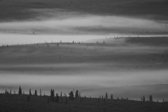 Day-06-Denali-National-Park-Early-Morning-Mist