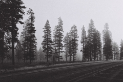 Oregon Outback Fog