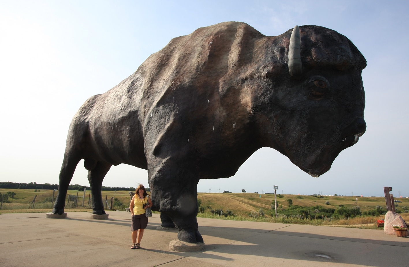 Worlds Largest Buffalo, Jamestown