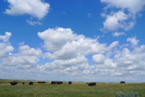 North Dakota: Dinosaurs & Badlands Bison