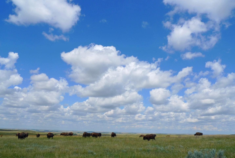 North Dakota: Dinosaurs & Badlands Bison